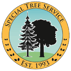 Special Tree Service | Removal | Trimming