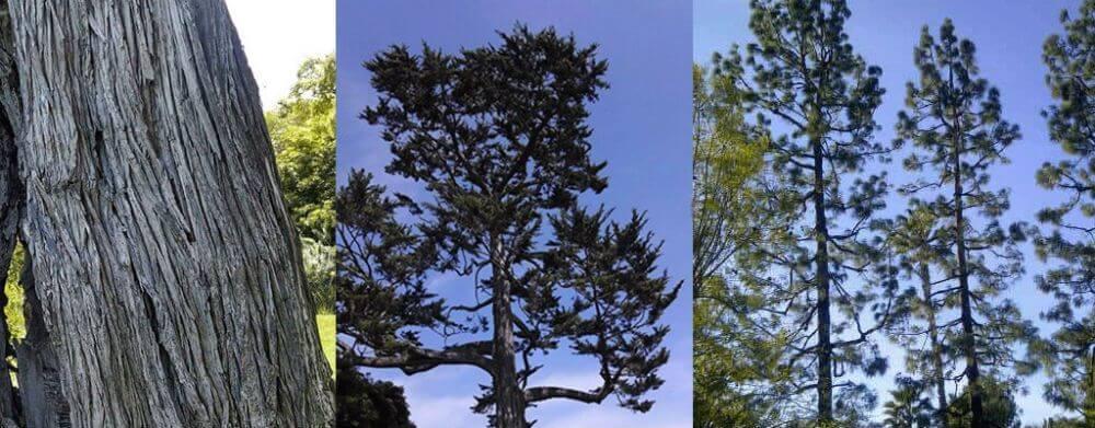tree-removal-service-la-cre