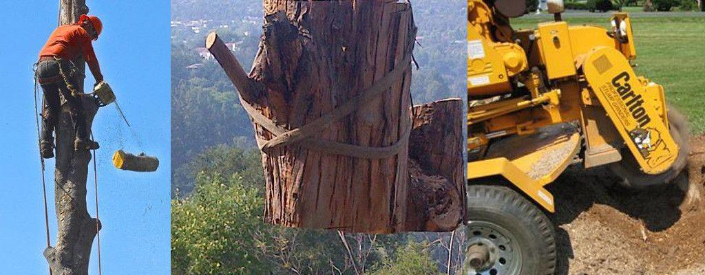 tree-service-slide