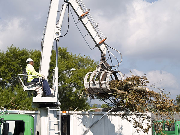 tree removal beverly hills 90210
